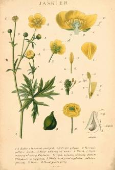 Botanika szkolna na klasy niższe : z tablicą barwną i 192 rycinami w tekście